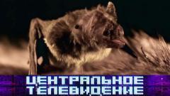 Центральное телевидение 02.05.2020