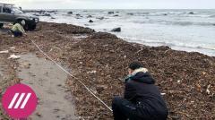Дождь. Во всем виноваты водоросли? Почему рано закрывать дело о катастрофе на Камчатке от 25.10.2020