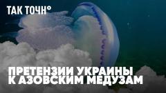 Претензии Украины к медузам Азова. Химера бабьего лета. Прогноз погоды на День Москвы. Так точн°